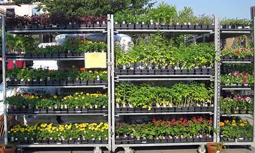Garden-Center-Annuals-Cart-500x300