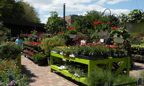 Genial Garden Center Chicago Flowers Paver Walkway 500x300