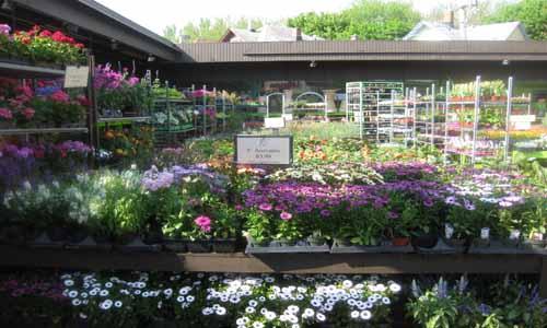 annuals-garden-chicago-selection500x300