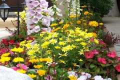 annuals-colorful-500x300