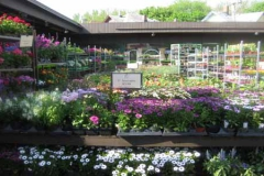 annuals-garden-chicago-selection500x300