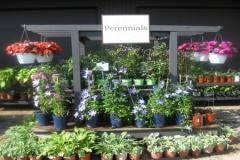 Perennials-garden-chicago-hanging-baskets-500x300