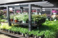 Perennials-garden-chicago-hasta-500x300