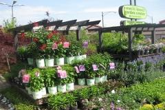 Perennials-garden-chicago-winners-500x300