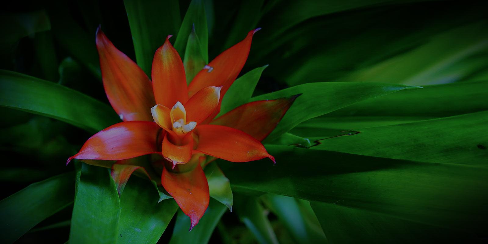 tropical-flower-1